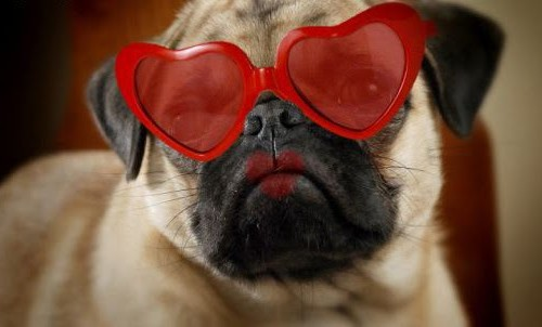 Valentines-Day-Images-with-Dogs-2