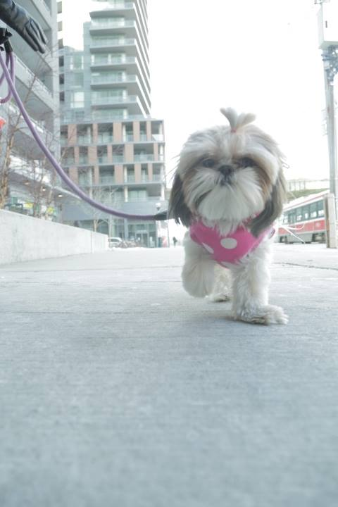 Photo by Walk My Dog Toronto