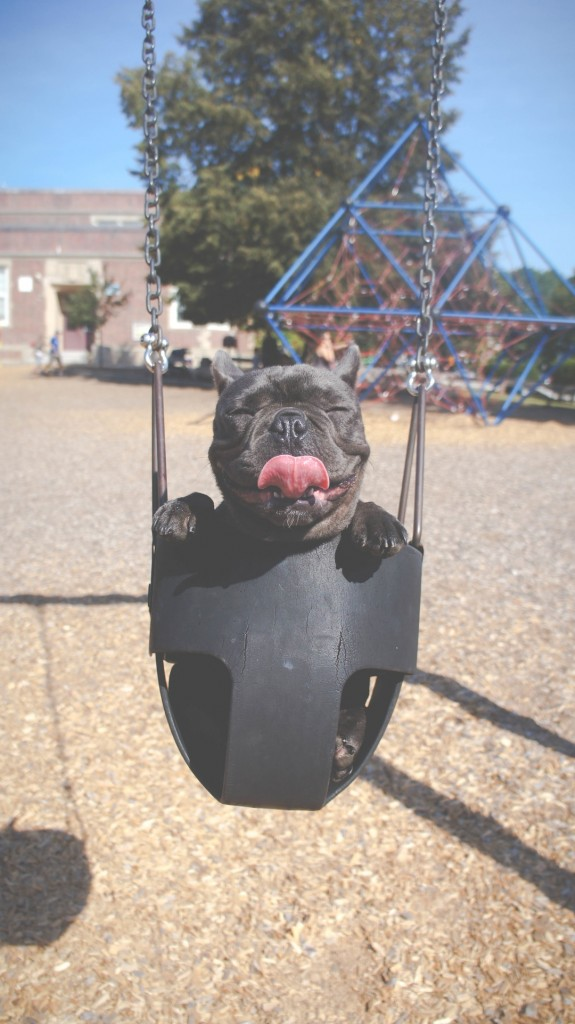 Pampered Pooches - Photo by Unsplash - Marion Michele